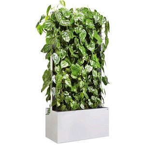 CP Pflanzen-Trennwand weiß 80,0 x 163,5 cm